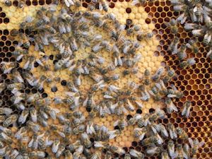 Home_Beekeeping01_300