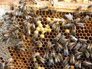 Home_Beekeeping02_300