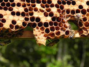 Home_Beekeeping03_300